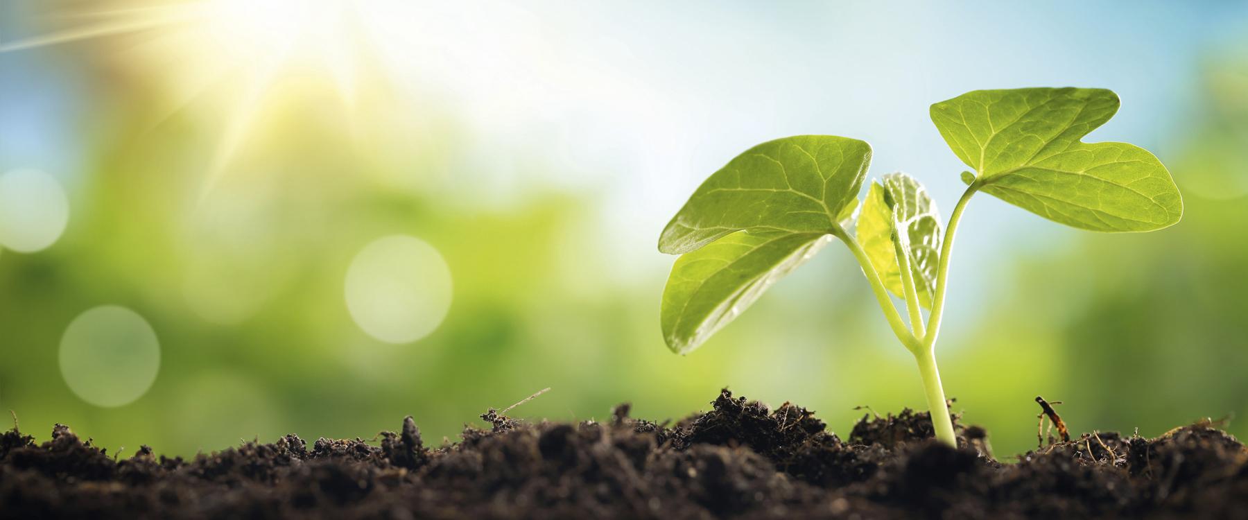 Pflanze die aus der Erde spriesst, Titelbild Plus Minus Solutions