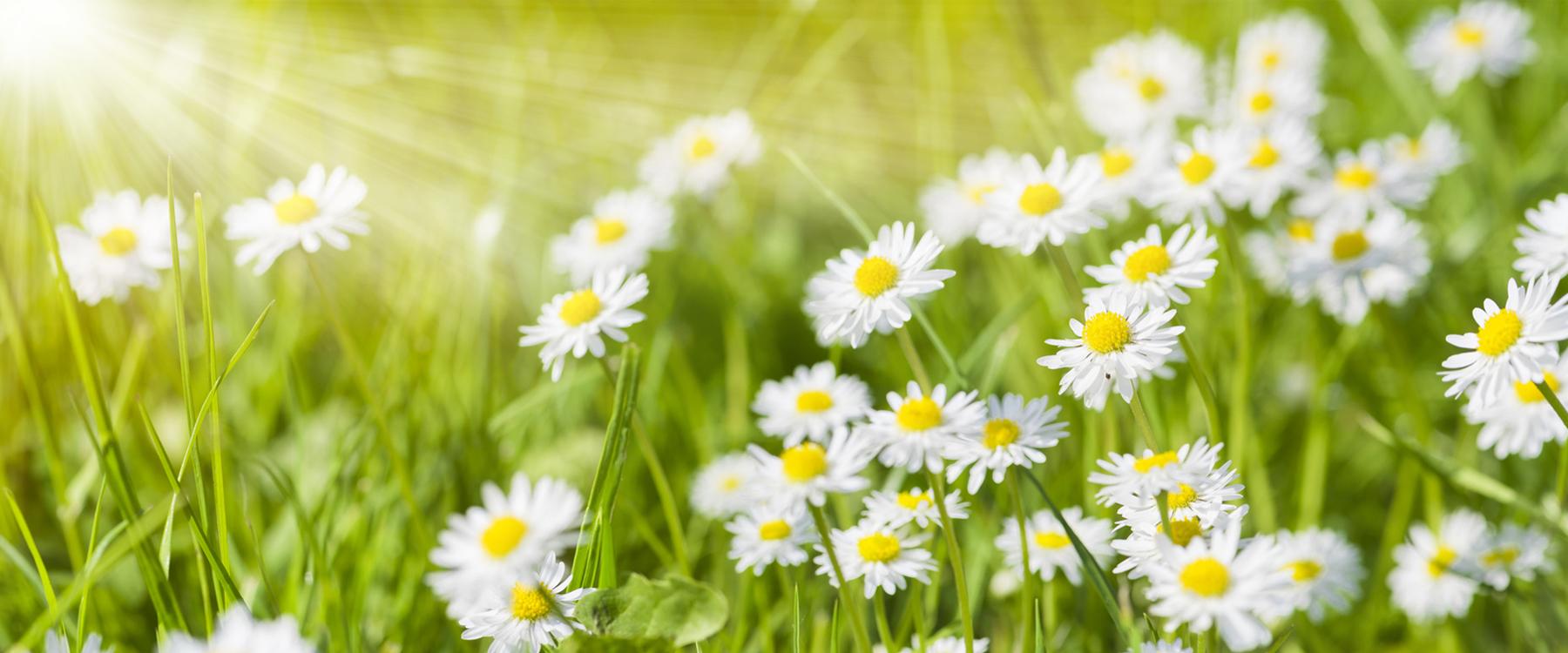 Bunte Blumenwiese im Frhling und Sonnenstrahlen, Titelbild Plus Minus Solutions